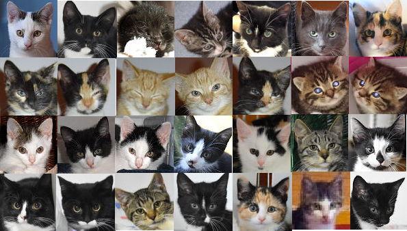 Unsere Katzenkinder.